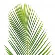 folhas de palmeira — Fotografia Stock  #2306388