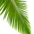 Stock Photo: Leaves of palm tree