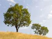 Tree on a background of the sky — Stock Photo