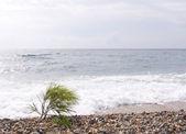 On a sea beach — Stock Photo