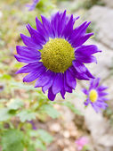 Flower close up — Stock Photo