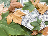 American dollars and autumn leaves — Stock Photo