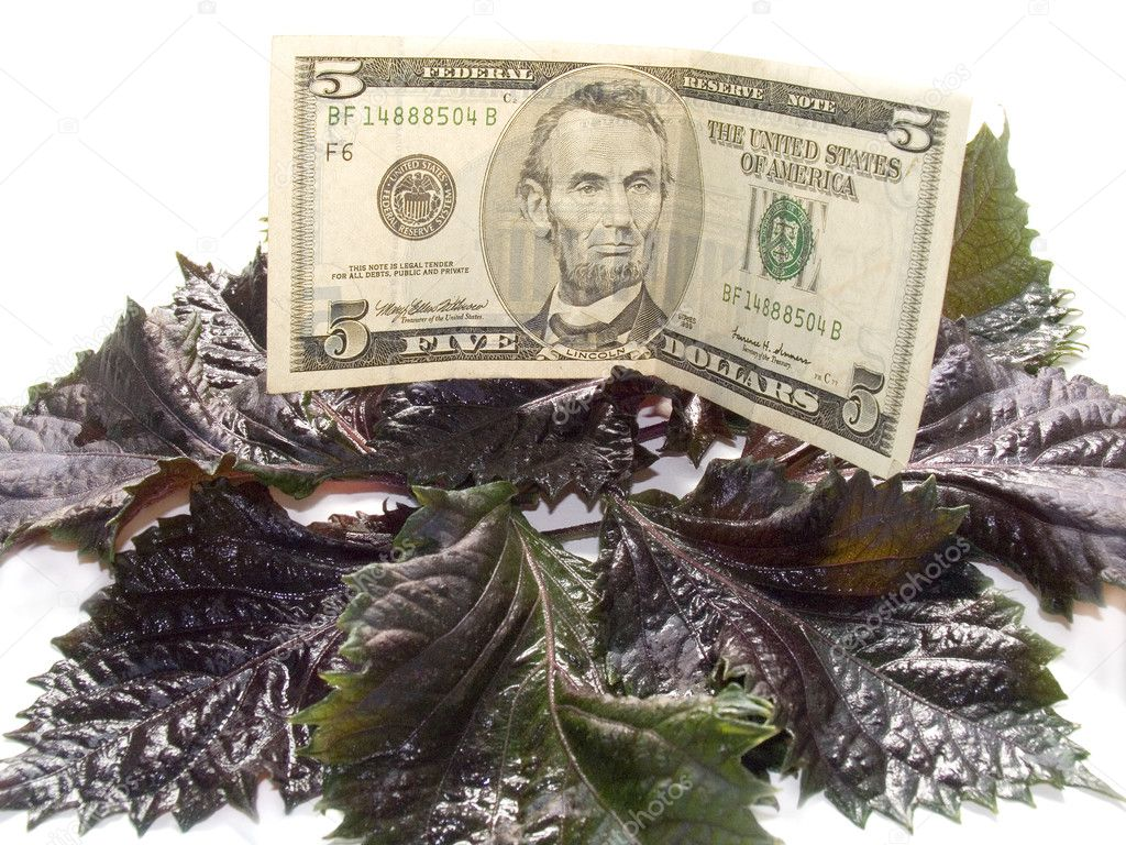 Five American dollars on leaves of a basil. Payment for dinner. — Stock Photo #1868340