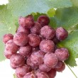 Cluster of a grapes with drops of water - Stock Photo