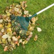 Cleaning of autumn leaves - Stock Photo