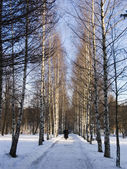 Winter way — Stock Photo