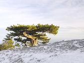 Huge old tree — Stock Photo