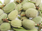 Crop of young unripe almonds nuts — Stock Photo
