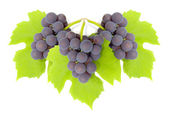 Some clusters of a grapes — Stock Photo