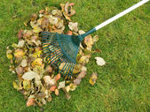 Cleaning of autumn leaves — 图库照片