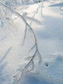Soğuk bir günde — Stok fotoğraf