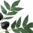 Branch with black olives — Stock Photo