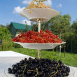 Red, black, white currant - Stock Photo