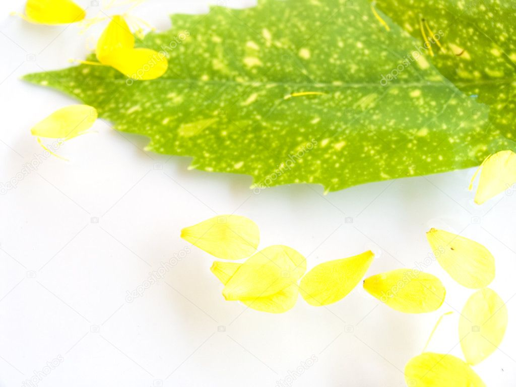 In water yellow petals and a green sheet float. Sharpness in the foreground on yellow petals.  — Stock Photo #2069951