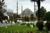 Tulips infront of Blue Mosque — Stock Photo