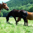 Royalty-Free Stock Photo: Horses pasture in mountain