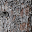 Bark — Stock Photo #1879428
