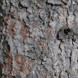 Bark — Stock Photo #1881317