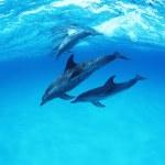Dolphin underwater — Stock Photo #1866634