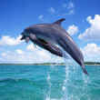Dolphins — Stock Photo #1872410