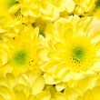 Bouquet of yellow chrysanthemums — Stock Photo #2512590
