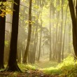 Forest trail - Stockfoto