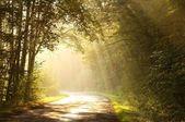 Forêt d'automne — Photo