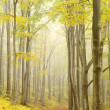 Picturesque beech forest — Stock Photo #1875363