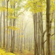 Stock Photo: Picturesque beech forest