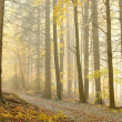 Royalty-Free Stock Photo: Picturesque forest in the fog