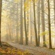 Picturesque forest in the fog — Stock Photo
