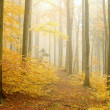 Autumn beech forest - Stock Photo