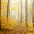 Autumn beech forest - Photo