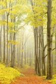 Floresta de faias pitoresca — Foto Stock