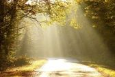 Morning light falls on forest road — Stock Photo