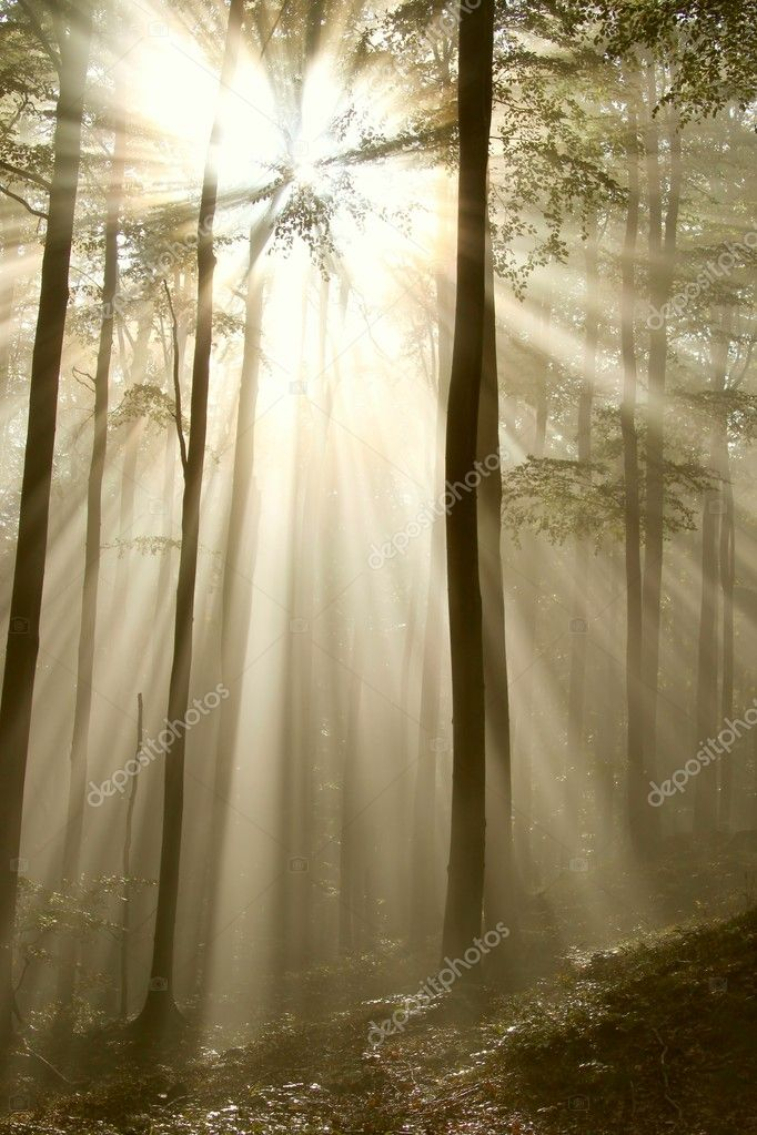 Sunlight shining between the branches of trees and falls into the misty autumnal forest. — Foto de Stock   #1875637