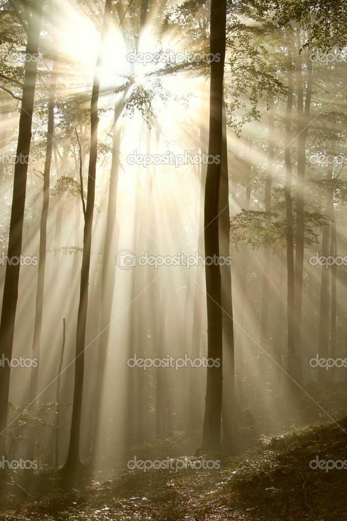 Sunlight shining between the branches of trees and falls into the misty autumnal forest. — Stockfoto #1875637