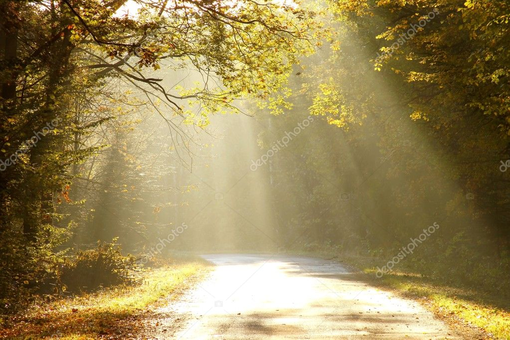 Road leading through an enchanted forest in a sunny autumn morning. — Stock Photo #1876566