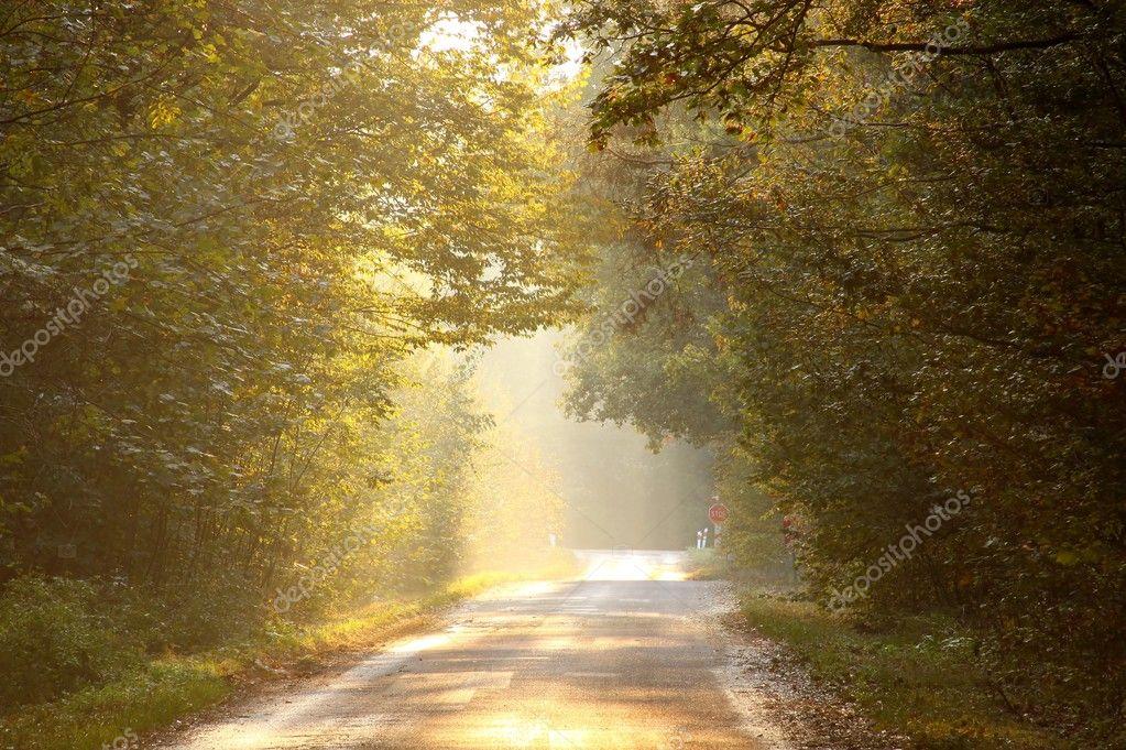 Фотообои Закат над лесом дорога