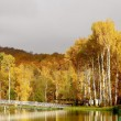 Autumn birches — Stock Photo #1917018