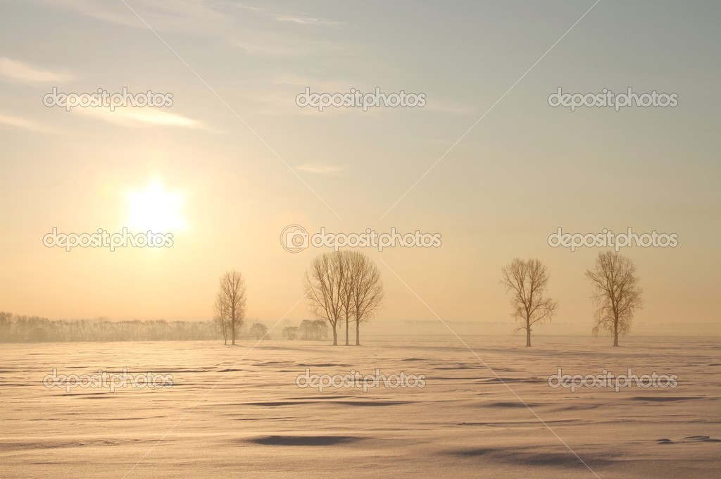 Picturesque sunrise over the trees in the field covered with snow. — Stock Photo #1966953
