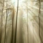 秋の木に日差しが降り注ぐ — ストック写真