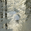 Winter coniferous forest — Stock Photo #1979837