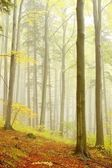 Picturesque beech forest — Stockfoto