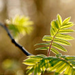 Spring leaves in the forest — Stock Photo