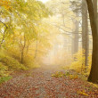 Picturesque forest path - Stock Photo