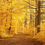 Lane leading through late autumn forest — Stock Photo