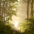 Spring forest lane — Stock Photo