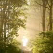 Stock Photo: Sunrise blowing on forest path