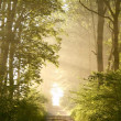 Sunrise blowing on the forest path - Stock Photo